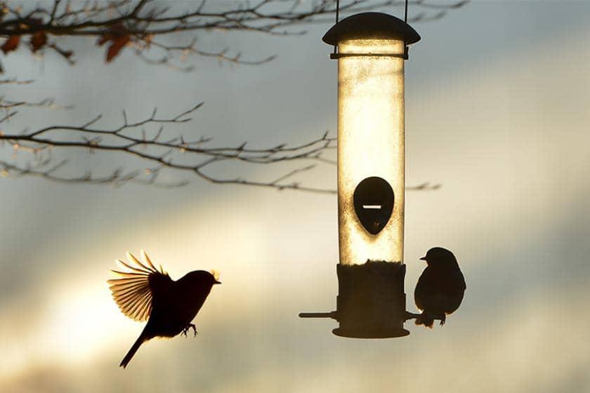 Two birds flying around a bird feeder during sunset.
