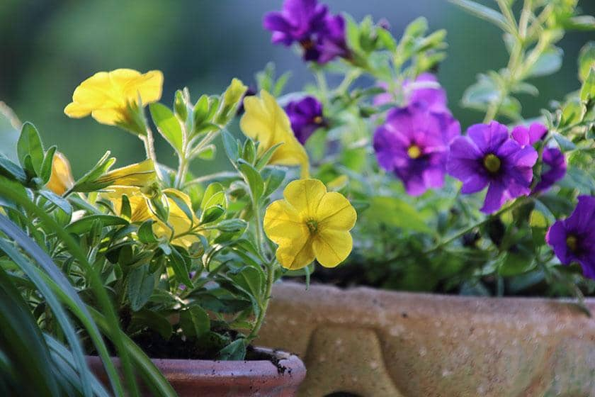 Flowers blooming in a garden