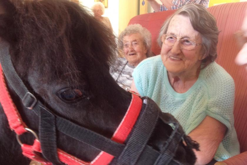 Sanctuary Care residents enjoy meeting a shetland pony in their care home lounge.