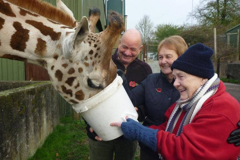 Sanctuary Care resident Norah feeds a giraffe during a zoo visit.