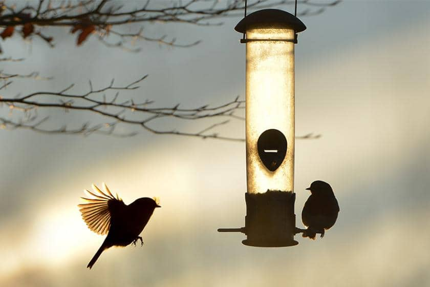 Two birds flying around a bird feeder during sunset.