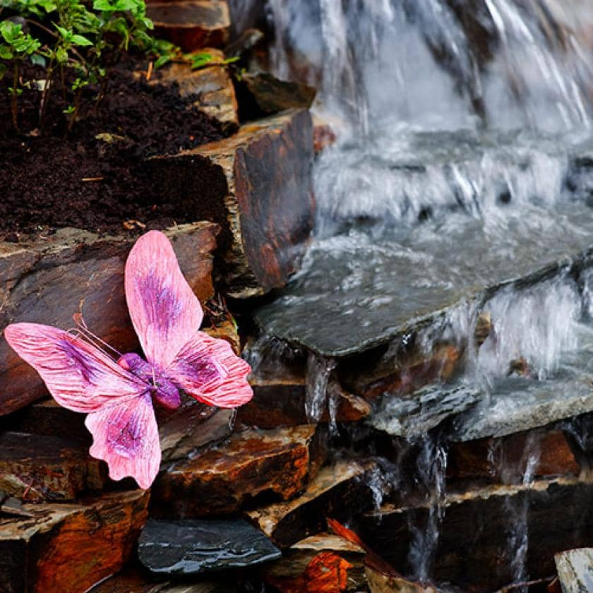 Butterfly waterfall at Ashley House