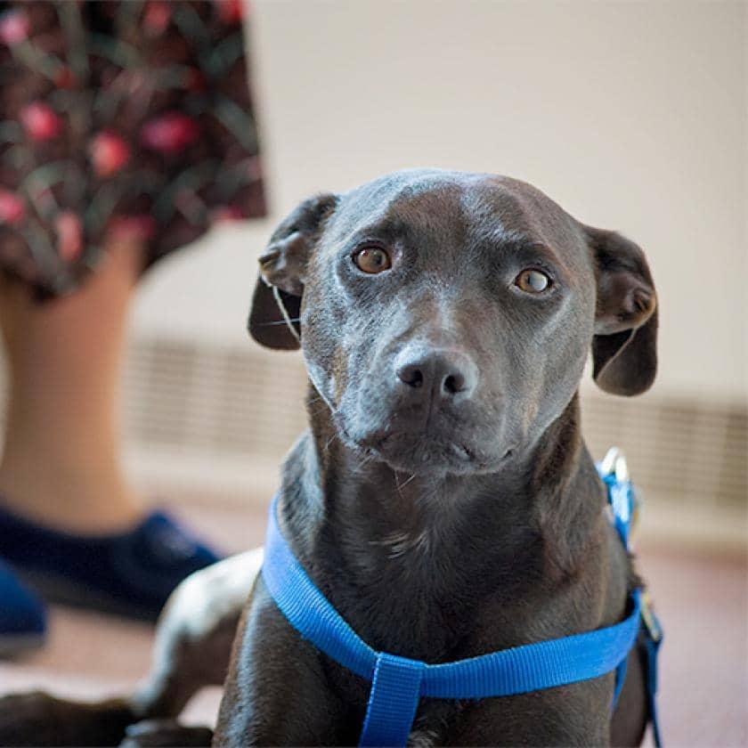 Tigi the Hastings care home dog