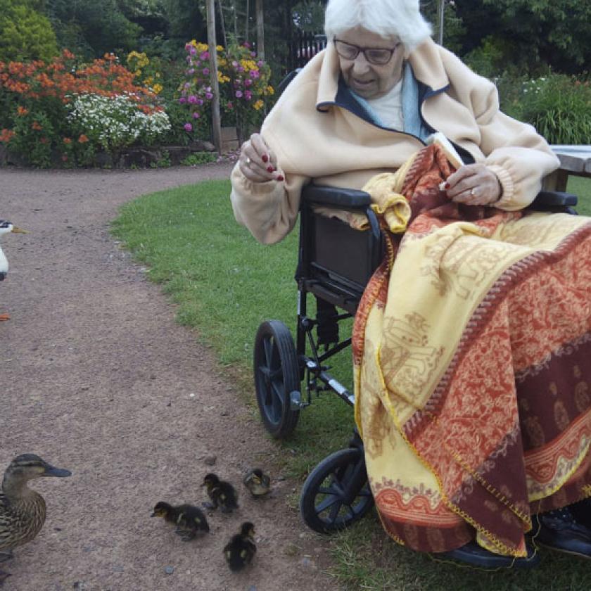 Lily in a garden feeding ducks