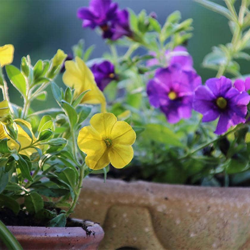 Appealing garden flowers
