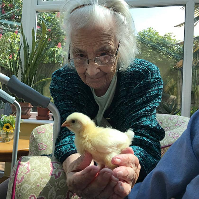 Feathered friends visit Wantage